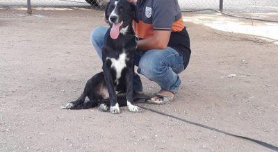 Progressive Dog Training And Boarding School Hyderabad Hachidog