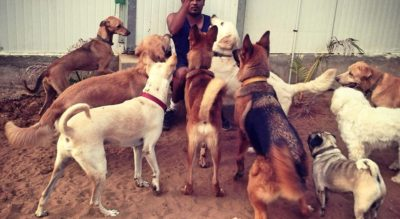 Hotel For Dogs In Chennai Largest Indian Dog Directory For Pet Related Services
