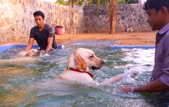 Listings Archive Largest Indian Dog Directory For Pet Related Services